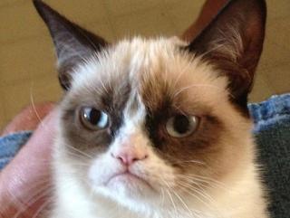grumpy%2Bcat%2B%2C%2C%2C%2C%2C.jpg