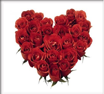 mawar_merah_21