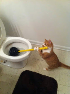 gato limpando privada