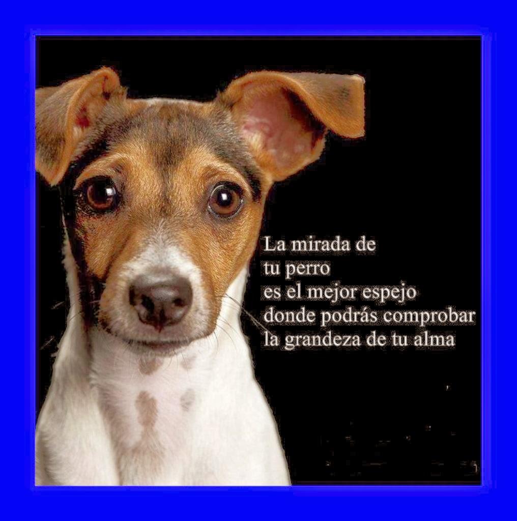 Mensajes de Mascotas
