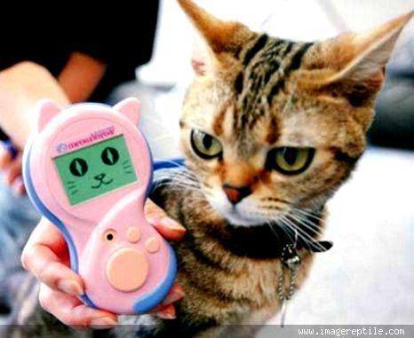alat penerjemah bahasa kucing