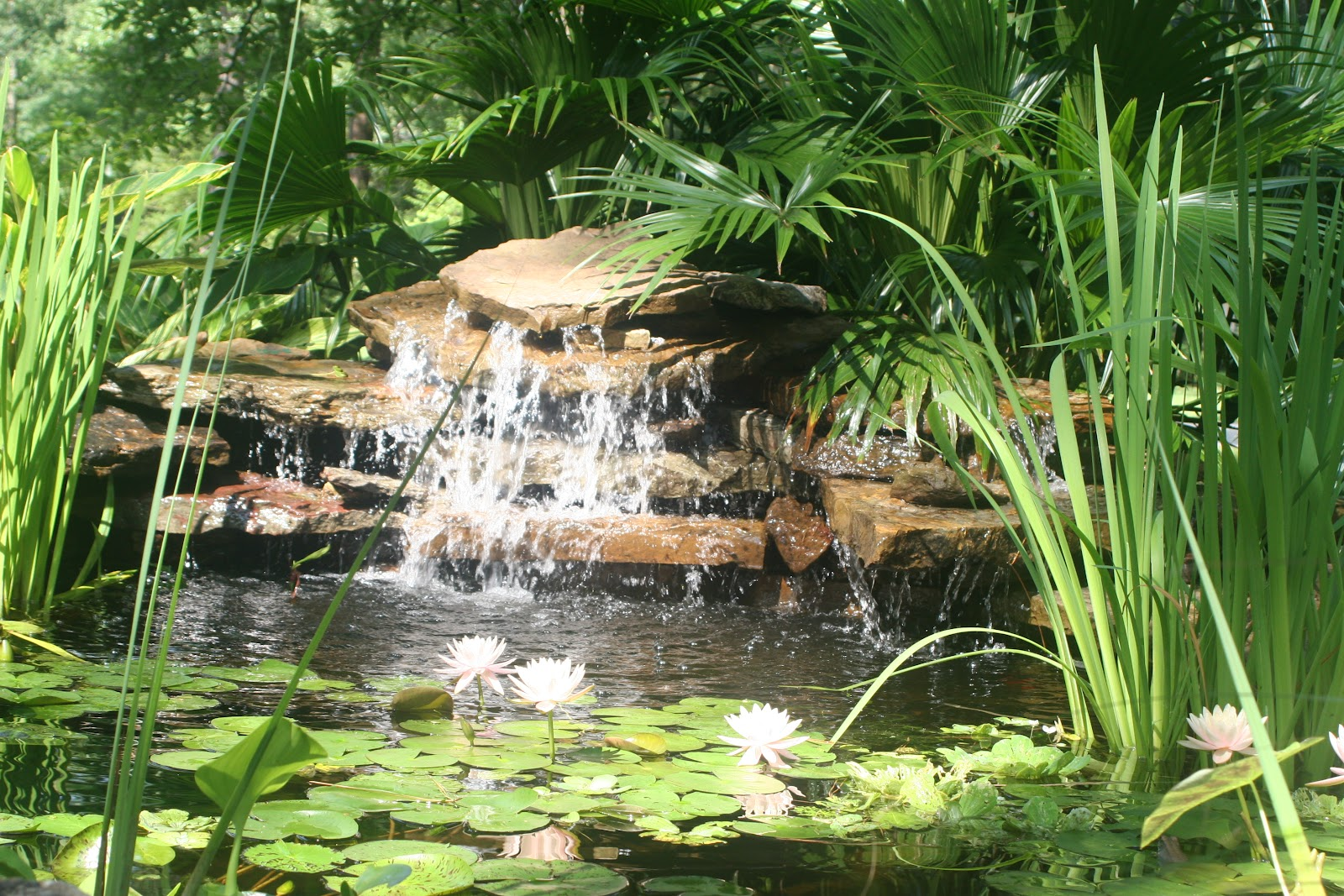 From the pondlady 39 s pad how to build a waterfall for Building a fountain pond