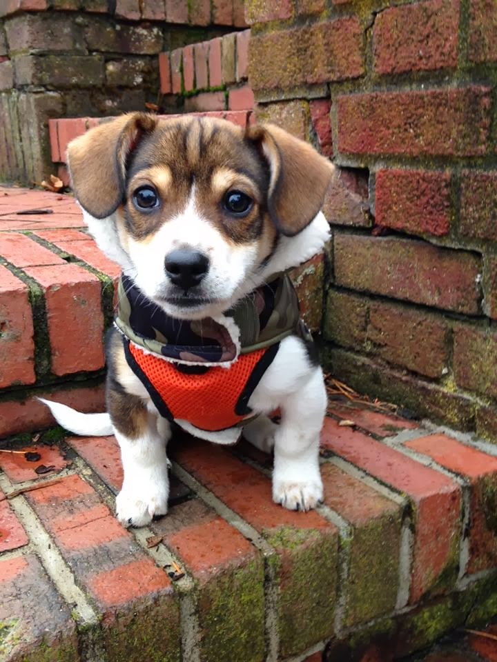 Cute dogs - part 7 (50 pics), puppy wears vest