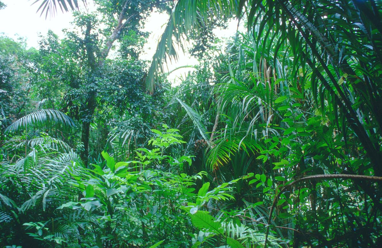 tropical rainforest A sampling of tropical rainforest animals rainforests are very dense, warm, wet forests they are havens for millions of plants and animals.