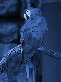 Color Macaw + Blue 416cbc; Mode Color; Opacity 100%