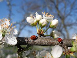 Идёт весна красавица