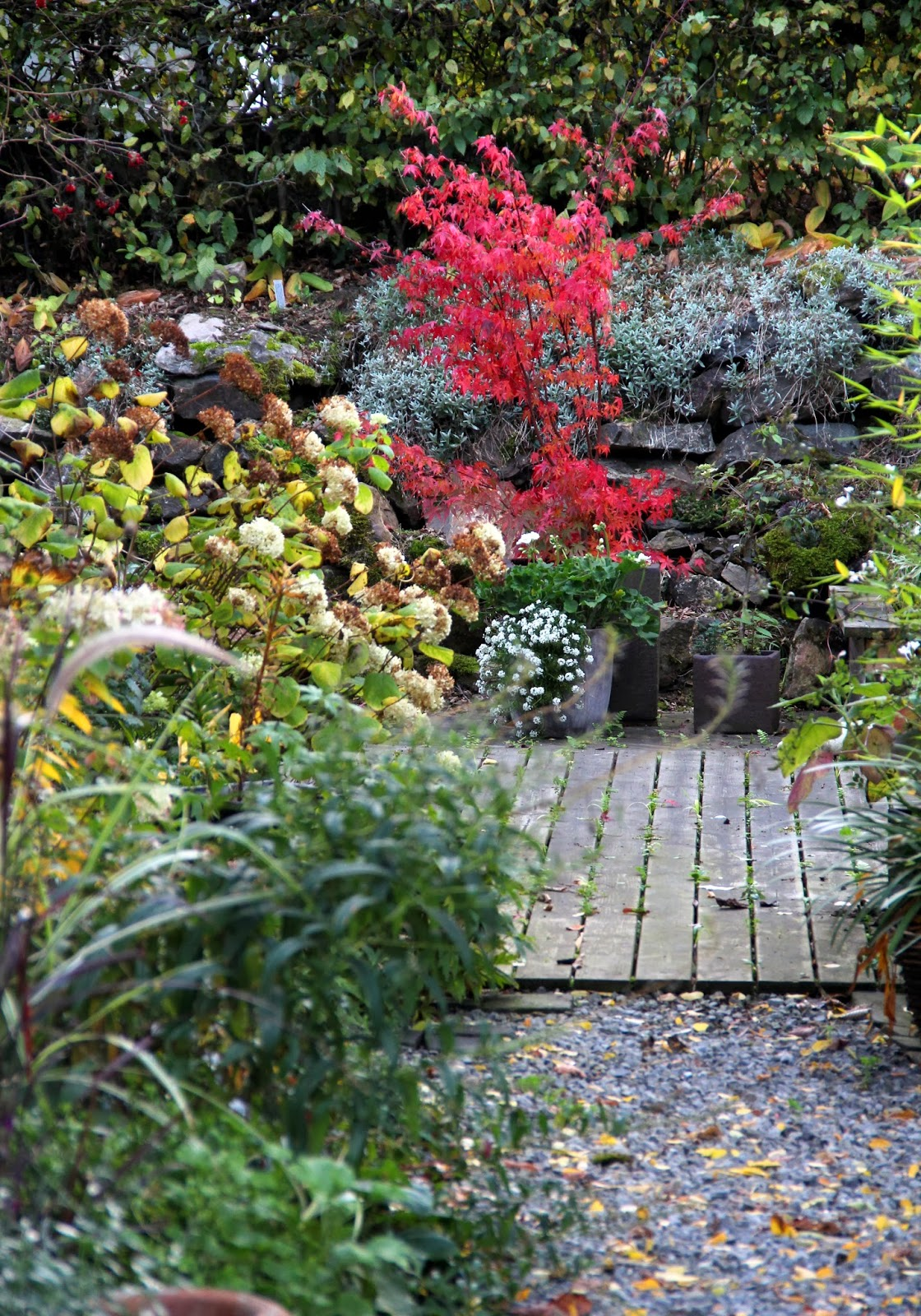 Je suis au jardin la fin des pinards for Dans in jardin