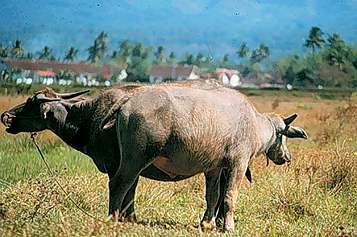 Tapanuli Selatan Dalam Angka: Daerah Padang Lawas Jelang ...