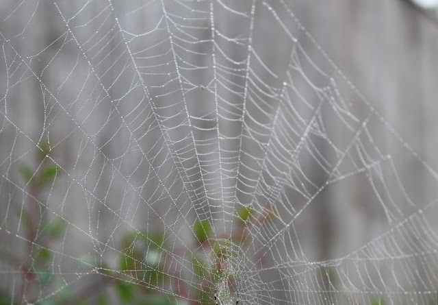 dew spiders web autumn photography