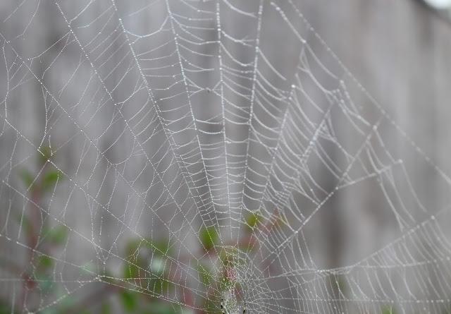 dew spiders web autumn photography