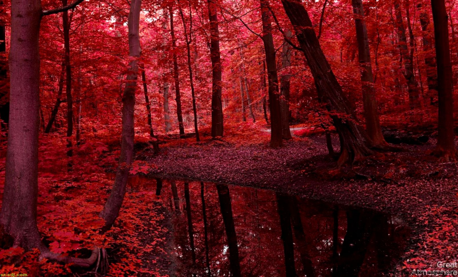 red  Nice and beauty of Red Autumn Forest And River Wallpaper