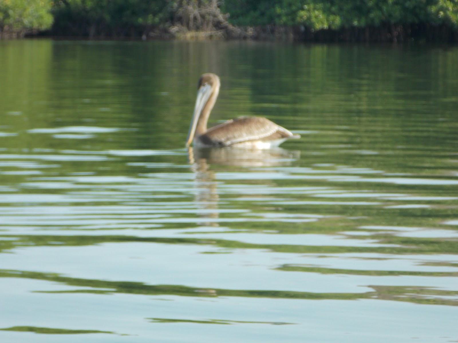 La Fauna en la Laguna de Coyuca
