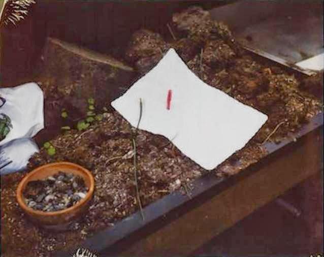 Kurt Cobain scena suicidio 5