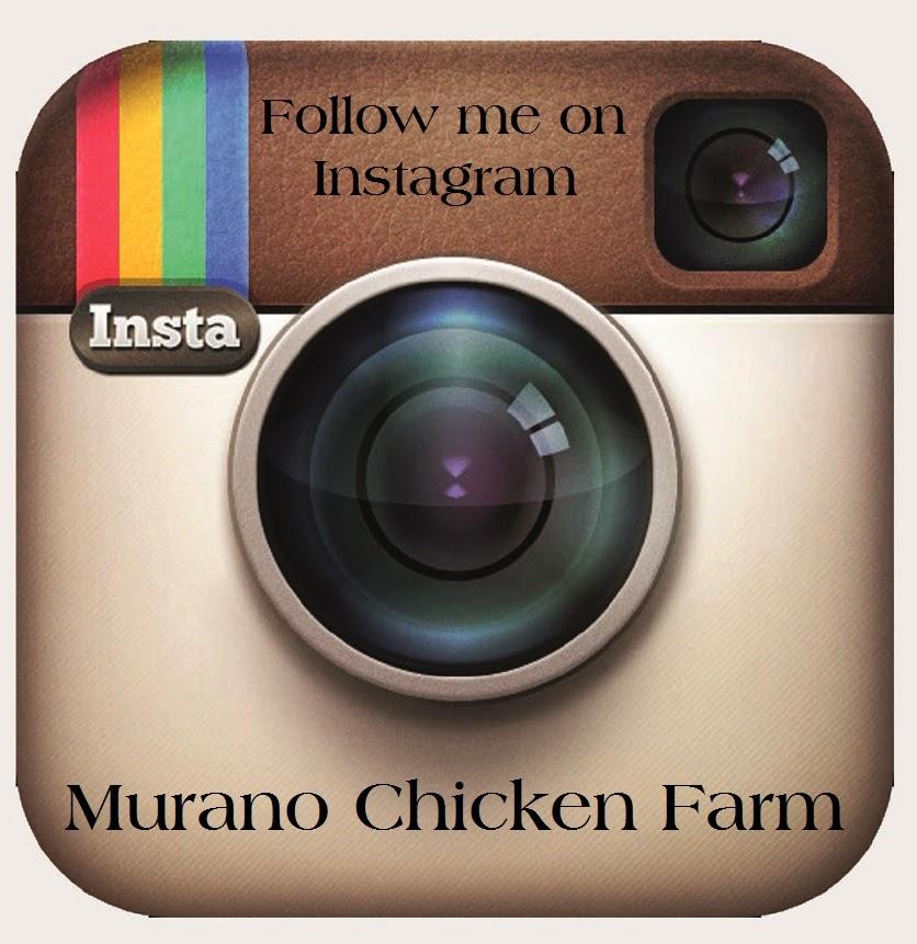 http://instagram.com/muranofarms