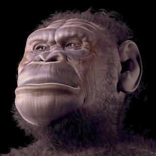 ator: australopithecus sediba