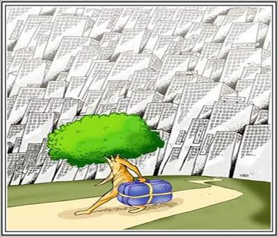 Cuida los árboles