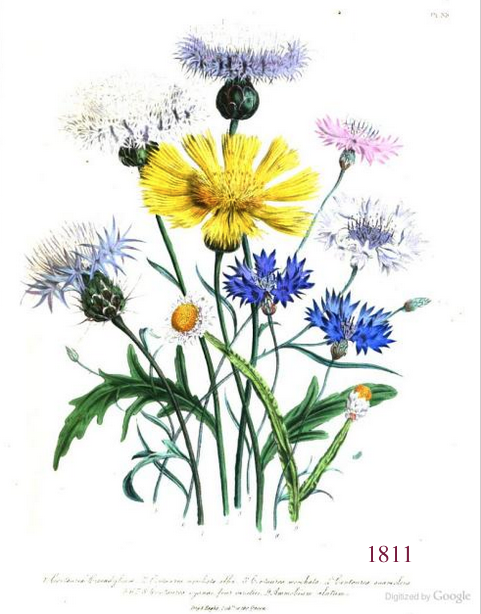 The promise of seeds magic in a packet plant common names if you enjoy a natural history of selbourne then go here to read a delightful journal of natural history that was kept from june 11th to july 13th in the izmirmasajfo