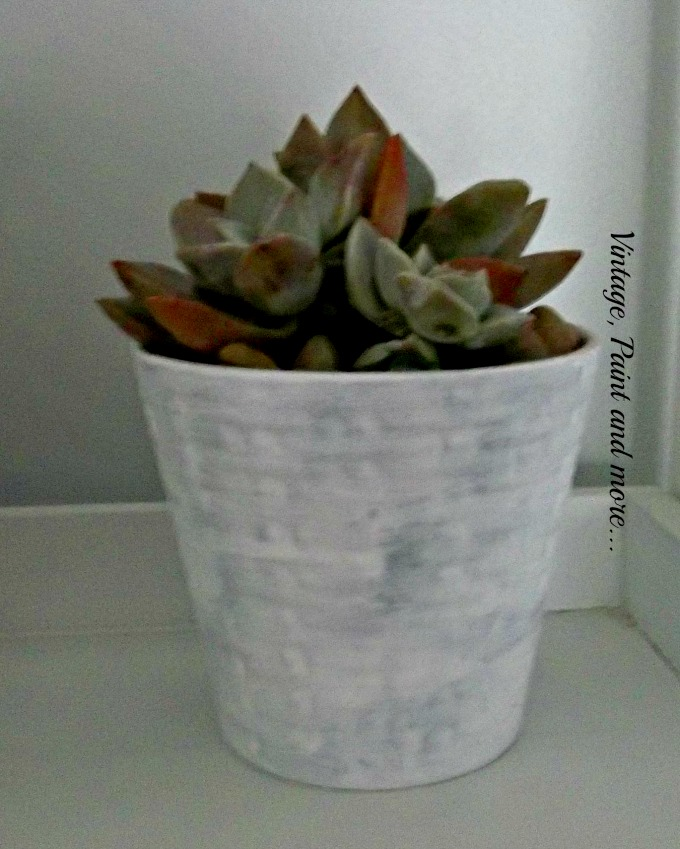 Succulents in Upcycled Dollar Store Pots - DIY chalk painted pot, succulent gardening, home decor with succulents, decorating with succulents