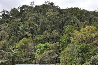 Madagascar+forest.jpg