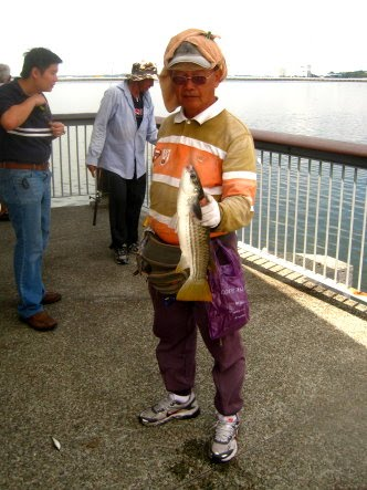 Mullet or Chow Orh [ 草乌 ] or Belanak Caught by Ah San weighing 1kg plus at Woodland Jetty on 22nd October 2012