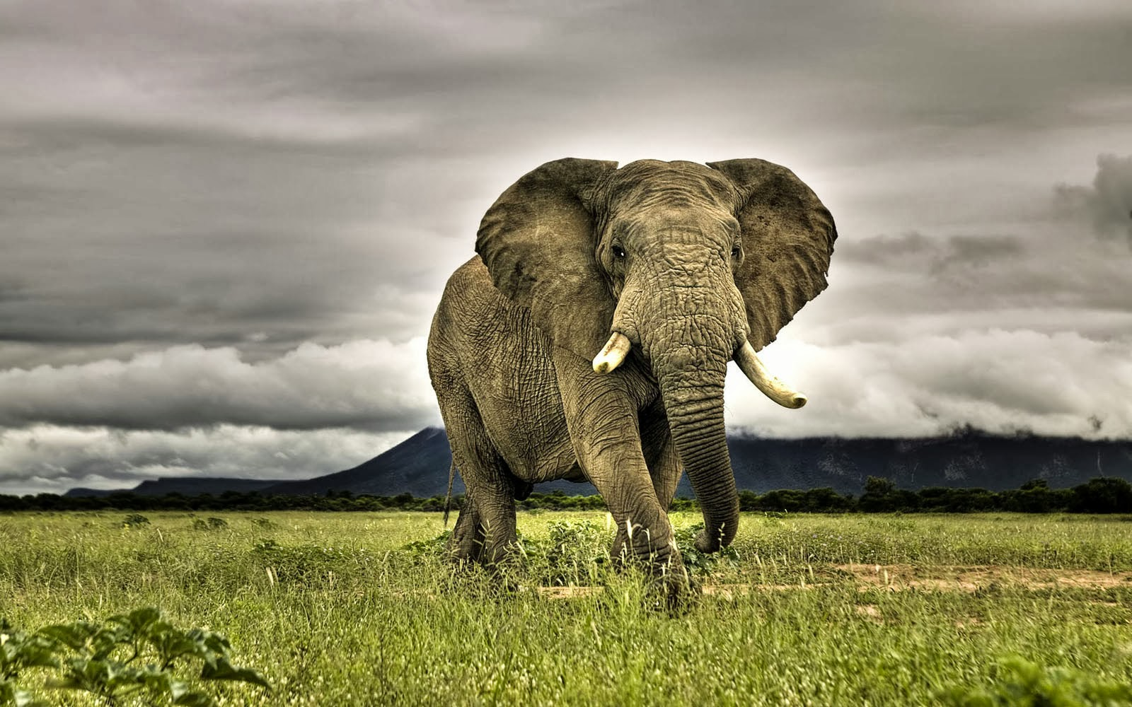african elephant hd wallpapers for iphone hd wallpapers