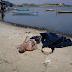 Corpo é encontrado ás margens da Laguna Araruama no Baixo Grande