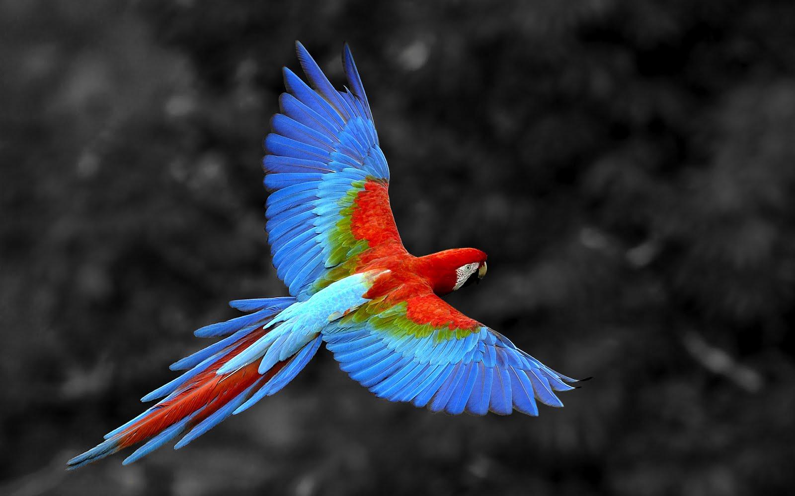 Guacamayo volando | Banco de imagenes Gratis