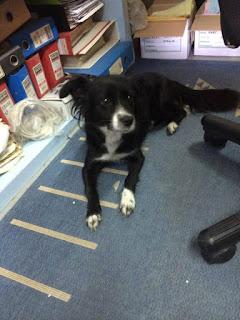 Η σκυλιτσα βρέθηκε σήμερα 19/10 στον Ταύρο. Φοράει λουρί για τσιμπούρια, είναι πεντακάθαρη. Την αναγνωρίζει κανείς