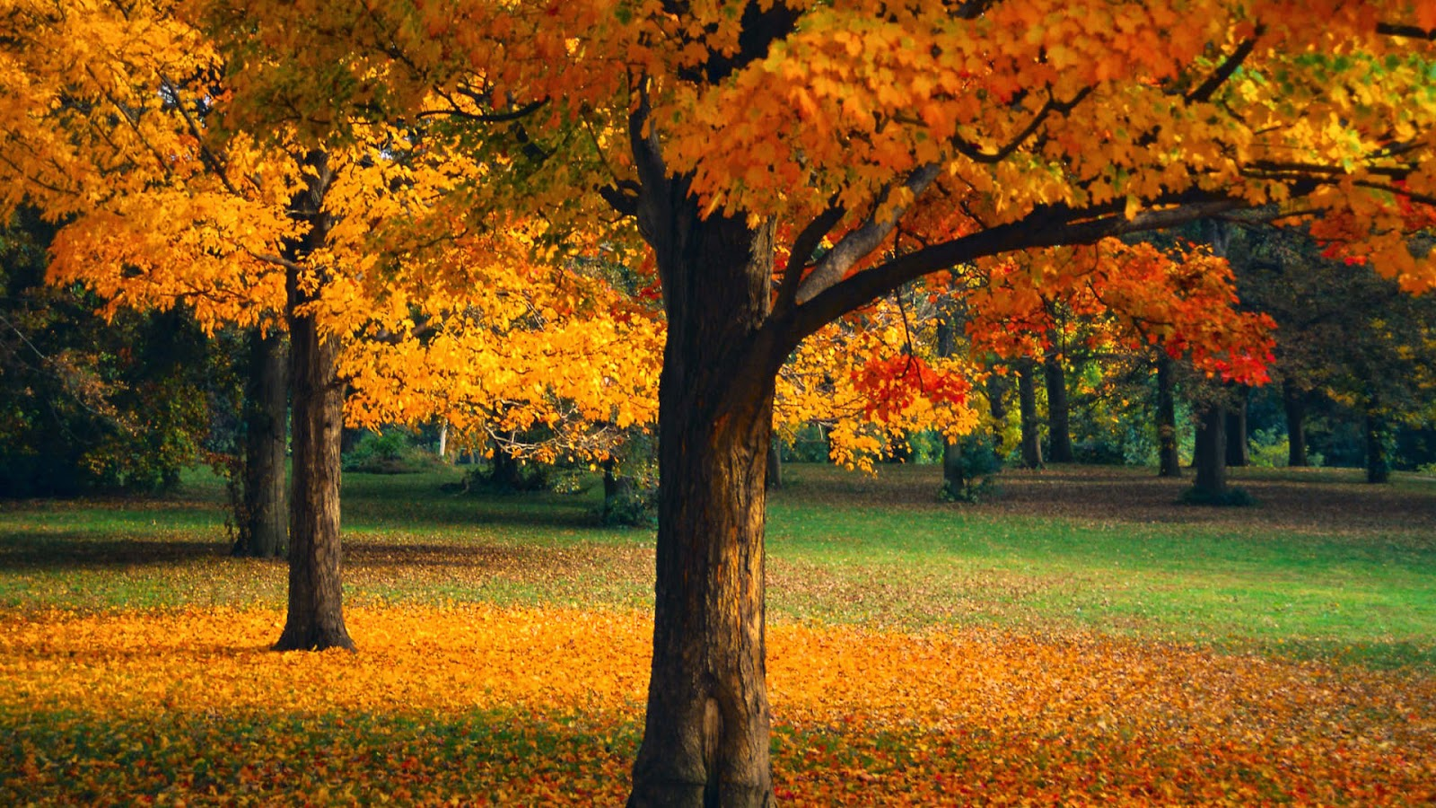 D Autumn Tree HD desktop wallpaper High Definition Fullscreen