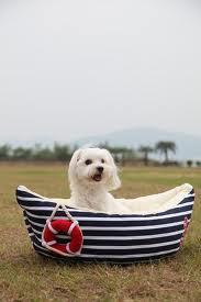 barquita para la perra