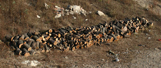 "The ""big logs"" pile as of this morning"