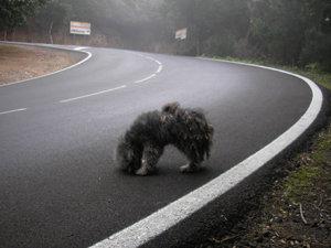 como, rescatar, rescate, animal, perro, abandonado, rescue, abandoned, pet, dog, ayuda, carretera, road