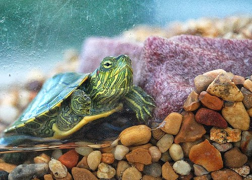 ... aquarium. Tortoises can survive if they are not given food but you