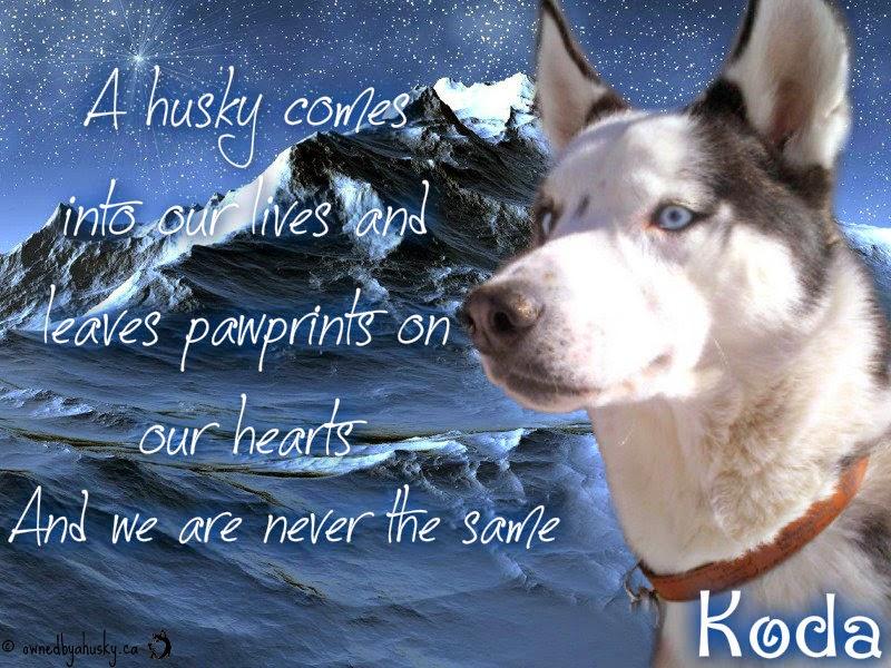 husky graphic