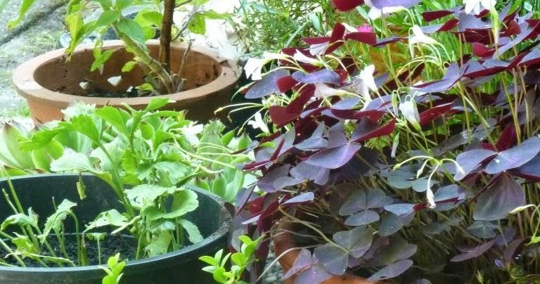 In m jn tuin tuinfoto 39 s juli 2014 - Bijzonder tuinfoto ...