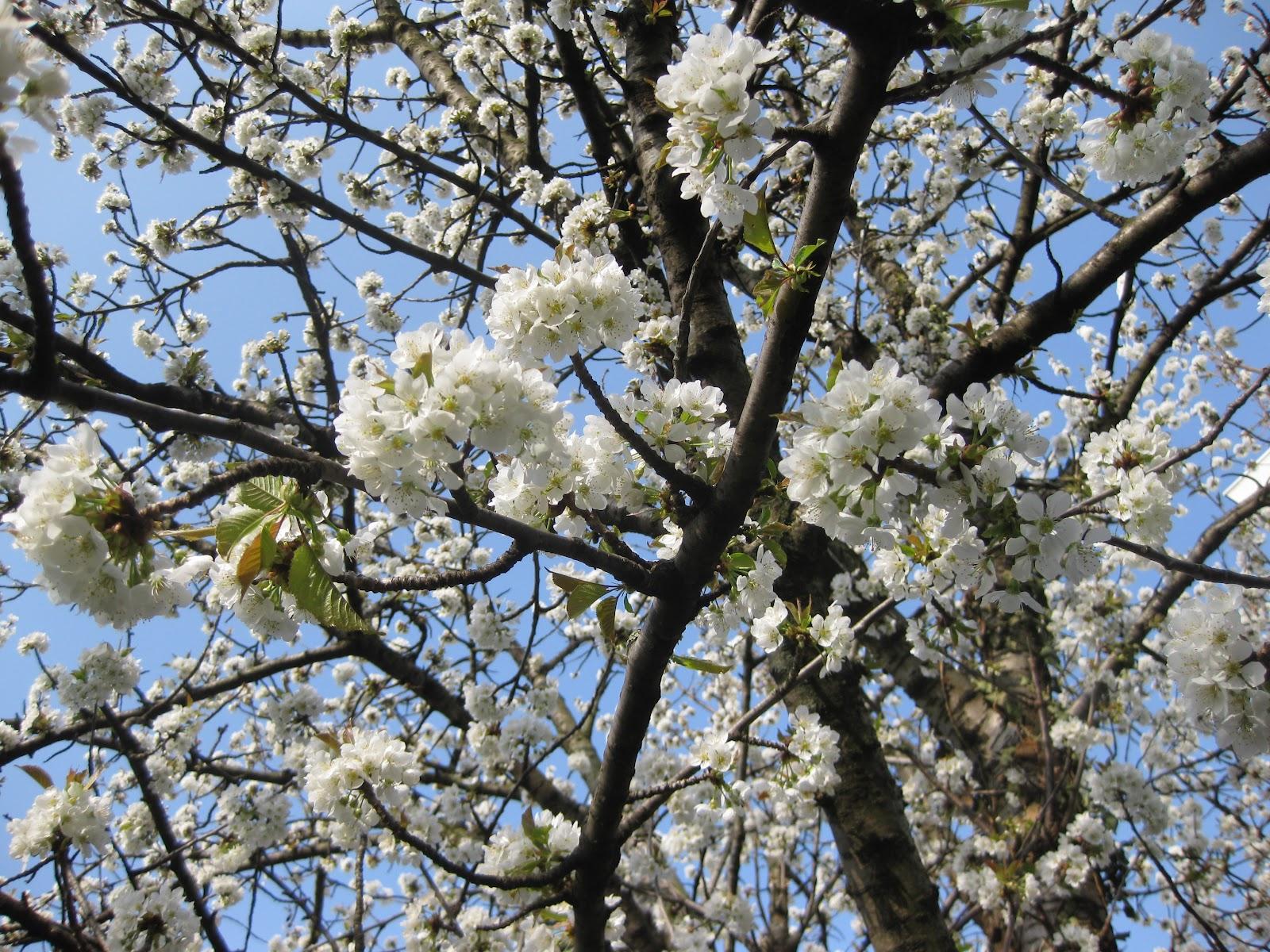 Du froufrou dans les feuilles mars 2012 - Linge blanc devenu rose ...