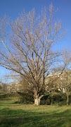 Ad oggi  <b>15</b> alberi piantati