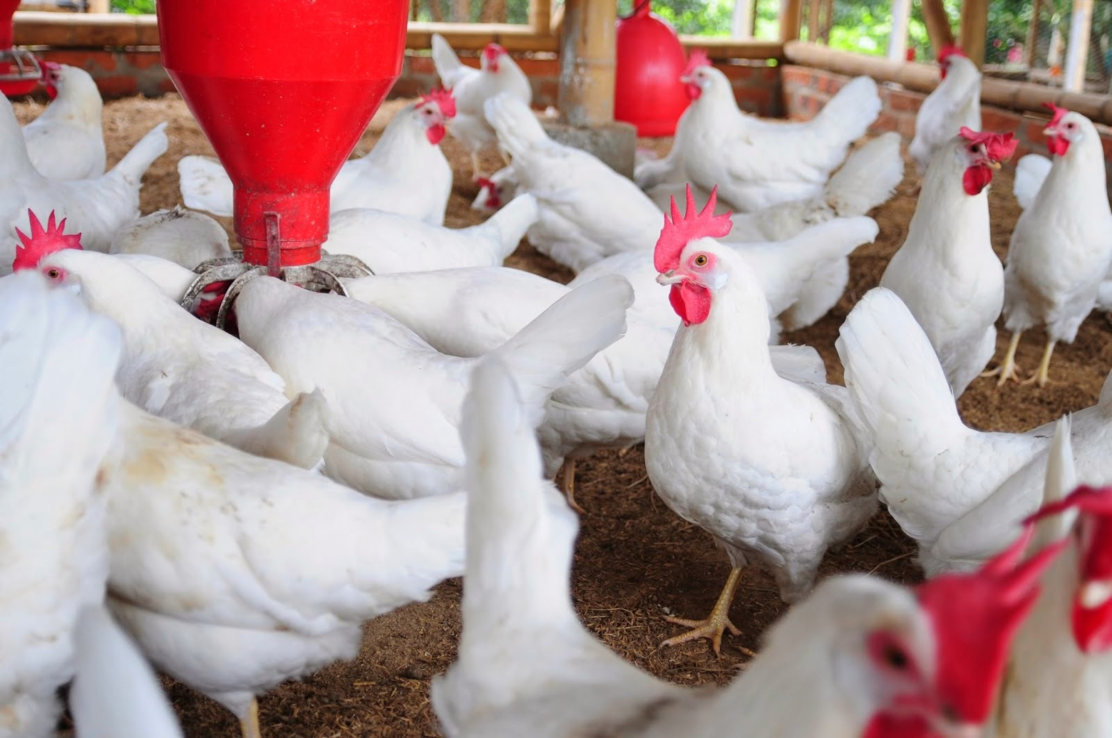 Proposal on poultry farming