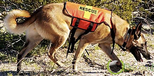 Anjing Penyelamat (Rescue Dogs)