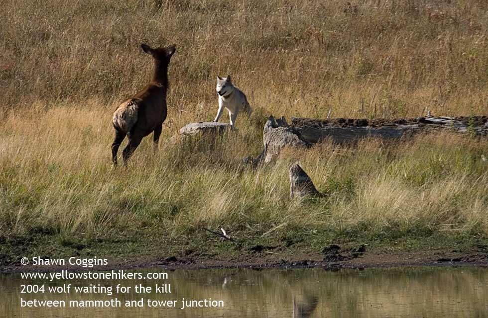 the elk hunt essay