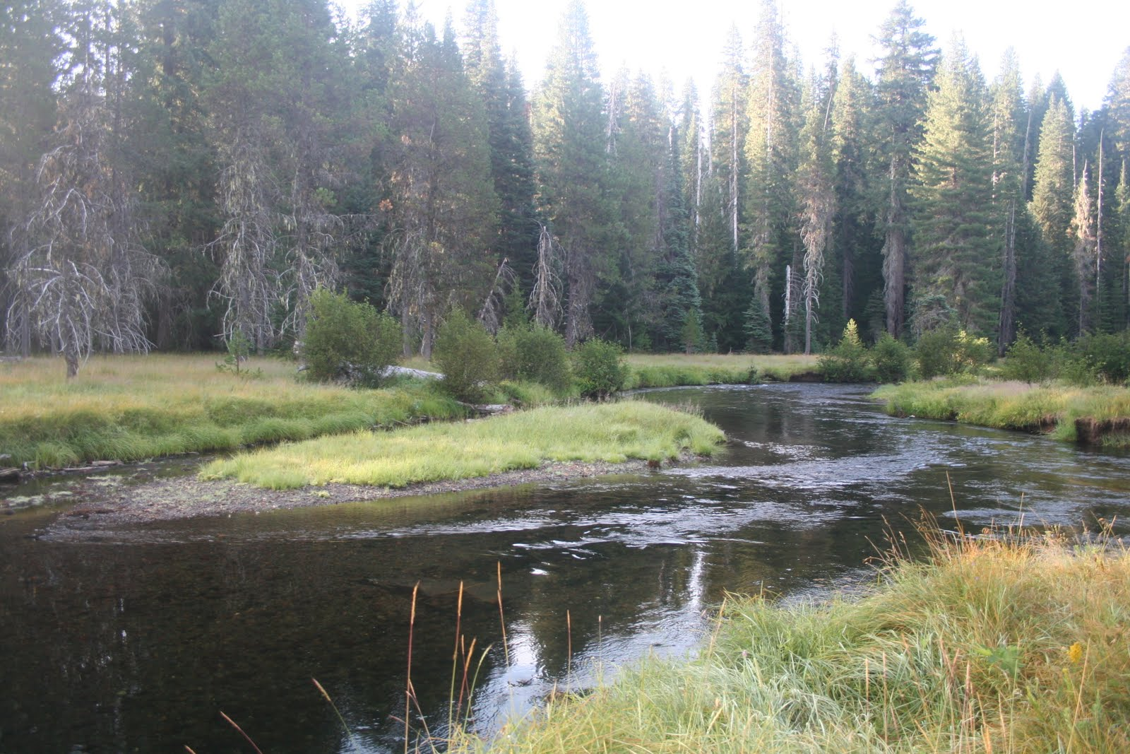The Five Flies Fishing Club: Upper Rogue River (Headwaters)