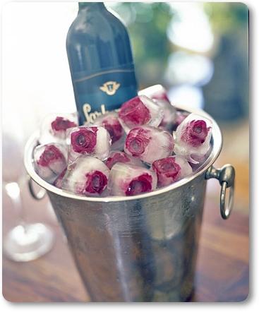 ice roses, isrosor, isbitar med rosor