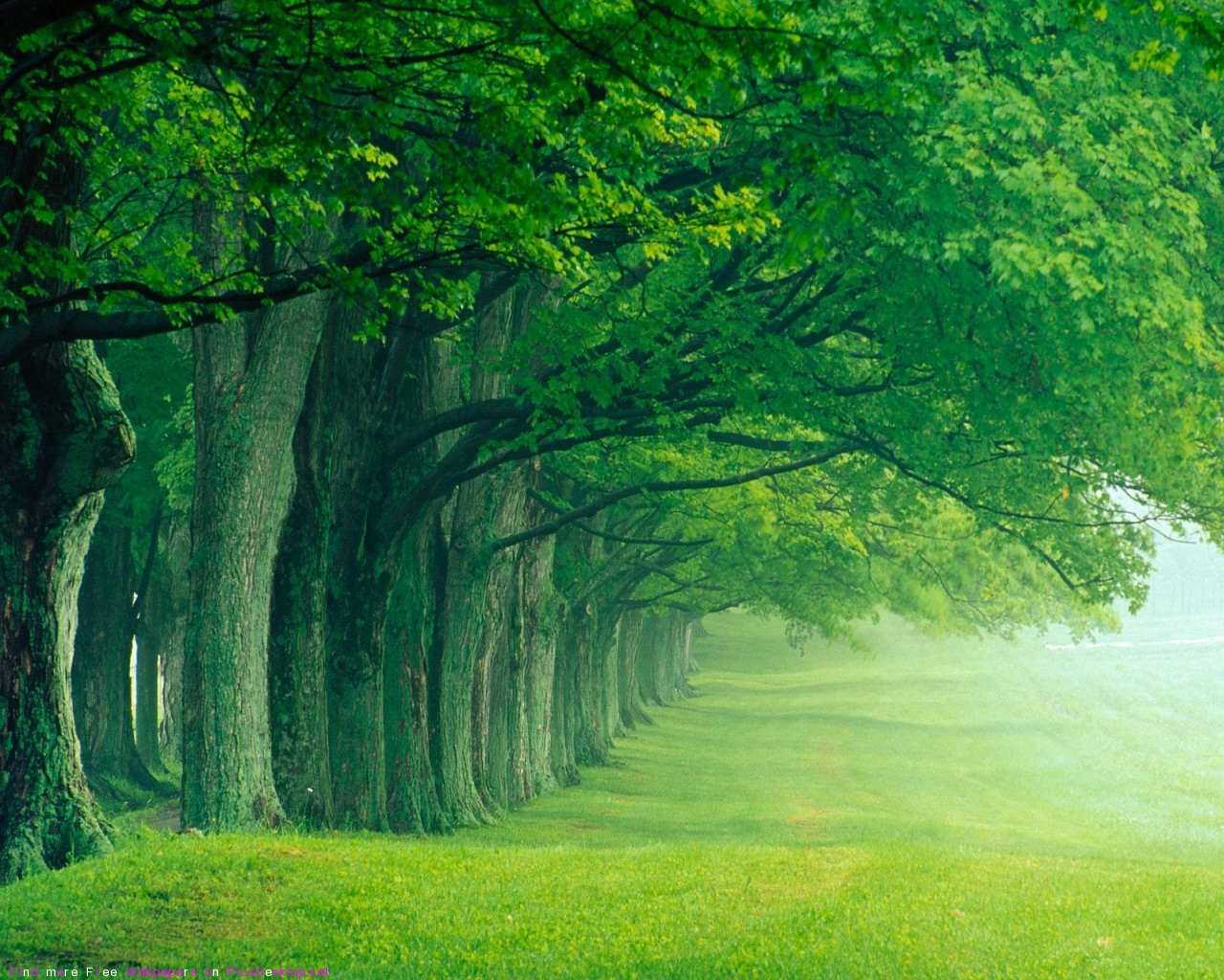 lush green forest wallpaper - photo #24