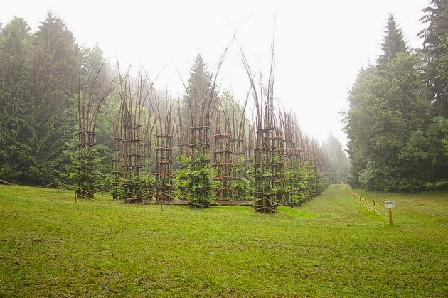 living architecture, living trees