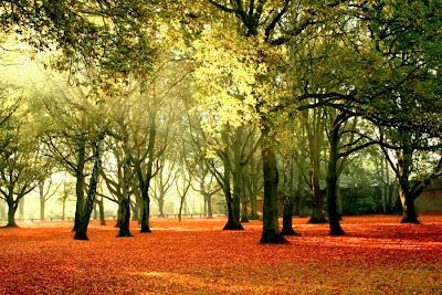 Pemandangan hutan pada musim gugur yang sangat indah