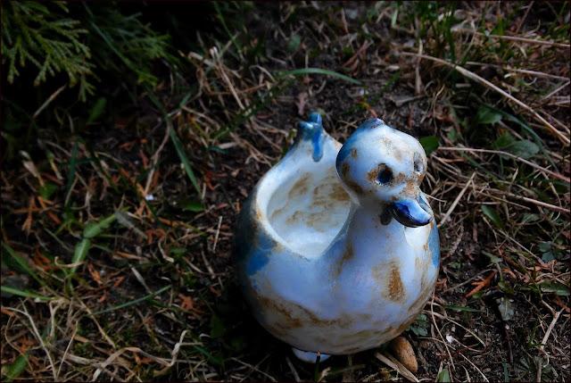 Nietypowy ptaszek