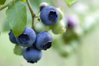 Blueberries and other produce continued to produce  glucosinolate to deter pests, even after being picked.