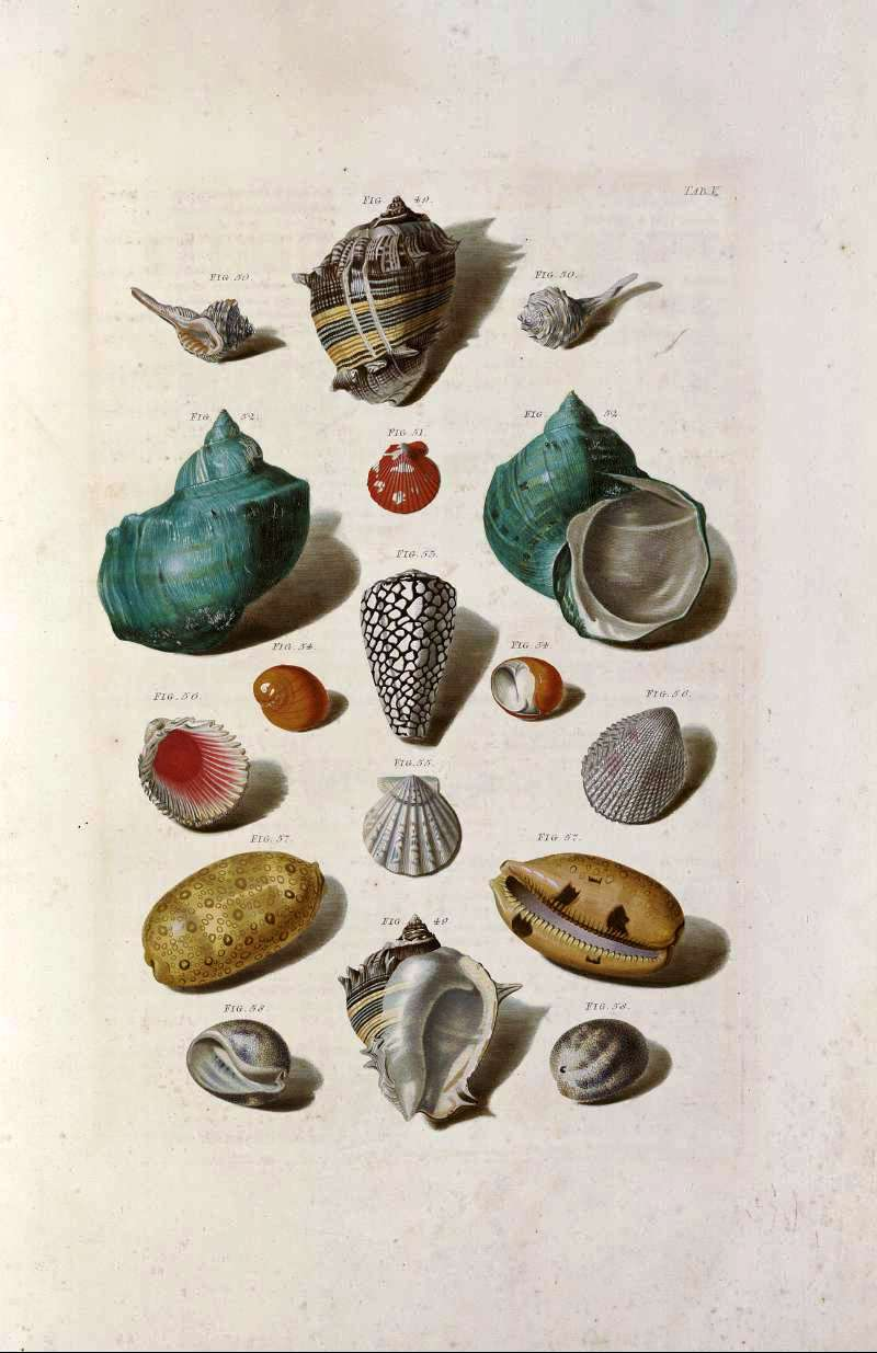Soft image in seashell printable