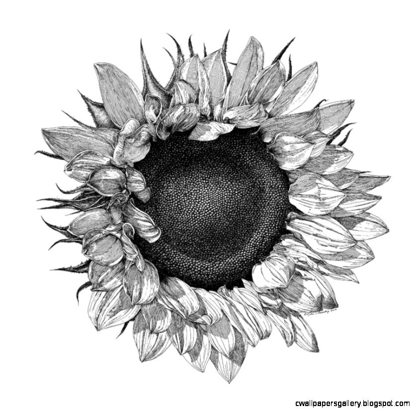1000 images about ink on Pinterest  Sunflower Drawing Dance Of