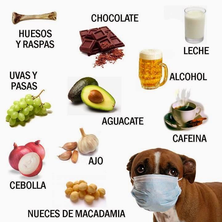 Alimentacion buena y sana